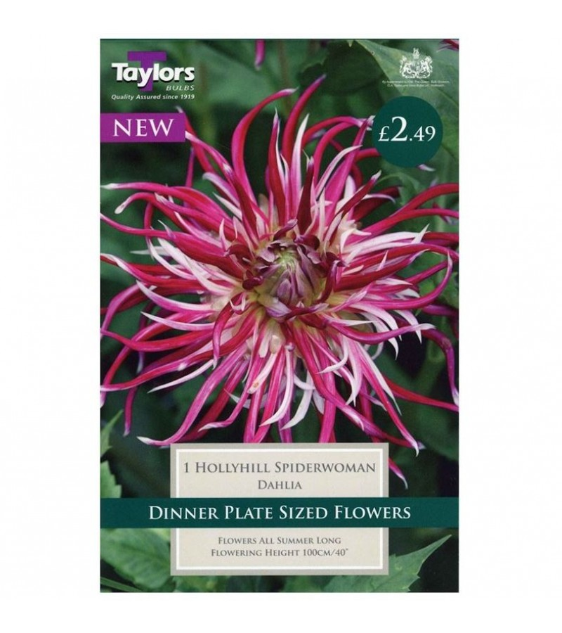 Taylors Bulbs - Hollyhill Spiderwoman Dahlia (Single)