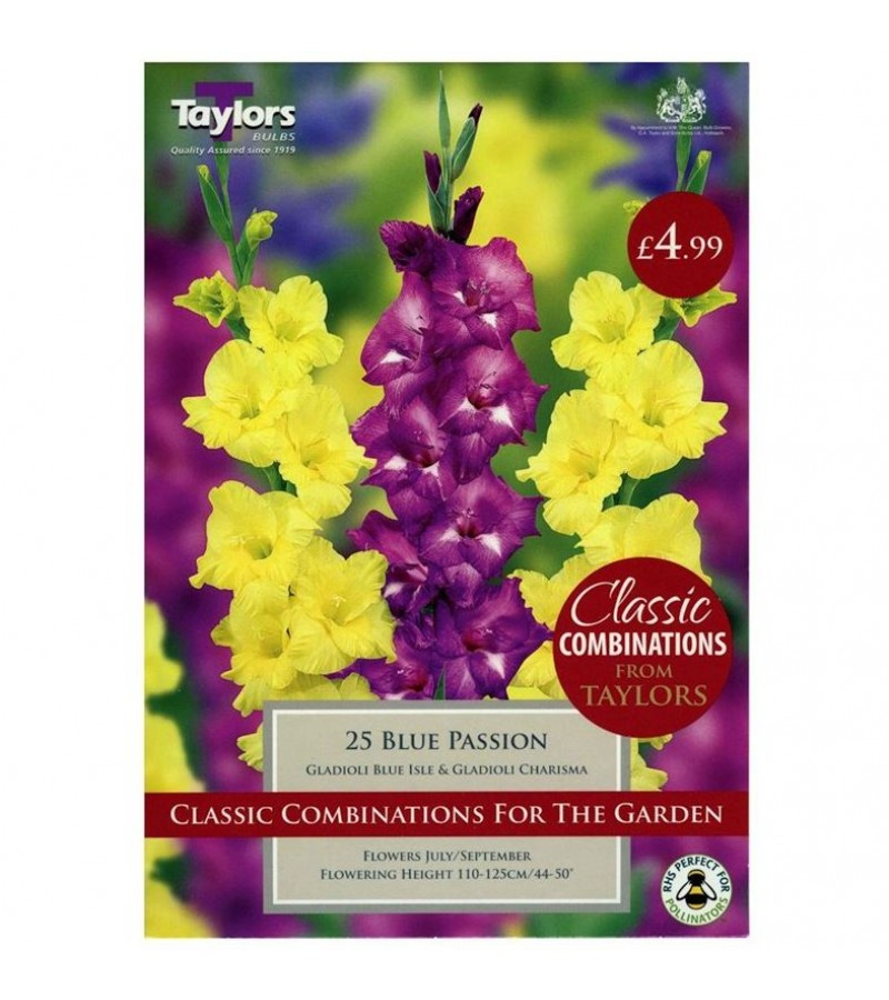 Taylors Bulbs - Gladioli Blue Passion (Pack of 25)