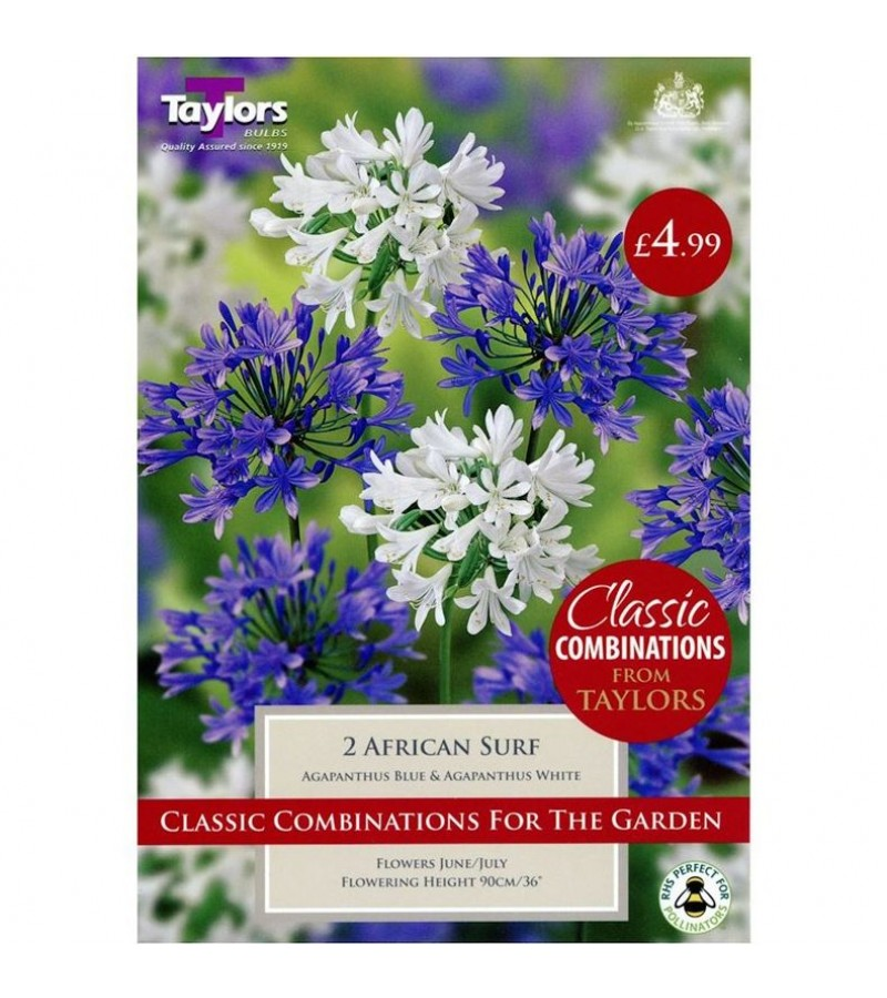 Taylors Bulbs - African Surf  Agapanthus (Pack of 2)