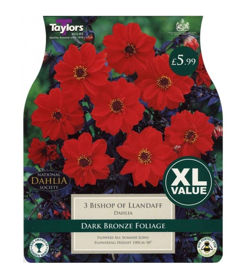 Taylors Bulbs - Bishop of Llandaff Dahlia (Pack of 3)