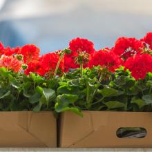 Tub & Basket Plants