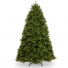 Newburgh Douglas Fir Tree - 8ft