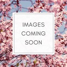 Hydrangea Runaway Bride- 2 Litre