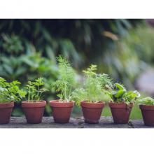 Herbs - 1 Litre