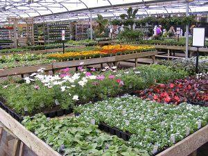 Wide range of summer bedding plants
