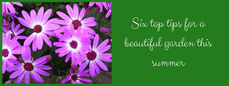 Six top tips for a beautiful garden