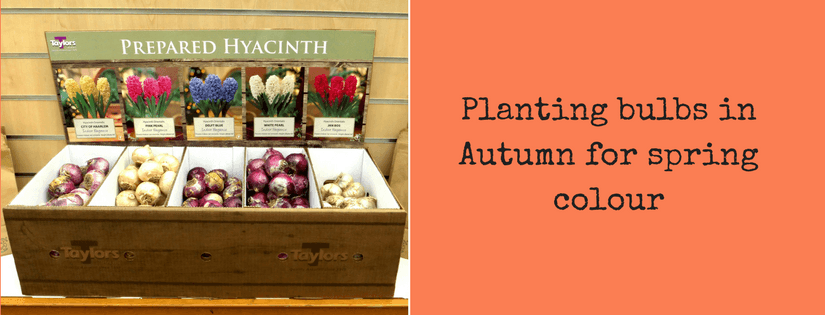 Planting bulbs in Autumn for Spring colour