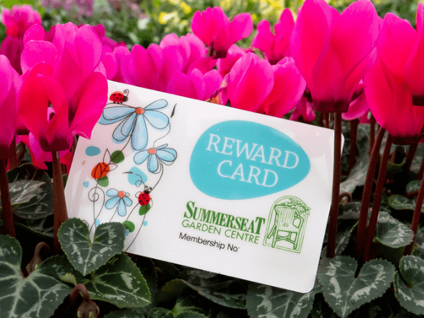 Pick Up Our Free Reward Card